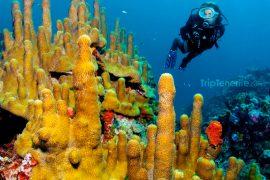 wunderschöner Meeresboden