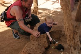 Meerschweinchen mit Kind