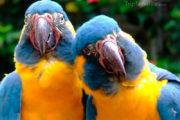 lustige Papageien