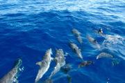 Delfinfamilie