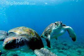 zwei Schildkröten