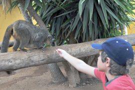 Kind füttert Lemur