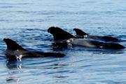 Wale Teneriffa