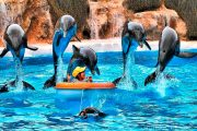 Delfine Loro Park