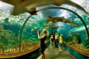 Loro Park Tunnel Aquarium