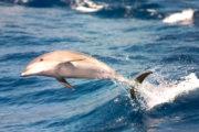 Delfin mit Maxicat