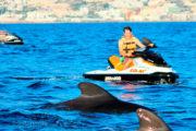 Delfine und JetSki